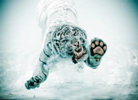 Odin the diving tiger V by Joeykunin