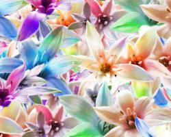 Orchids-1 by KF53