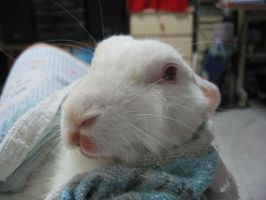 Ah Xing in blankie by Asaciel