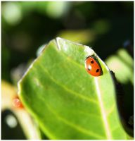 Ladybird by Art-ography