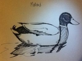 Mallard in Ink by lionessgirl2007