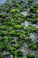 moss top by awjay