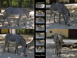 Zebra_Stockpack by xxSana-chanxx