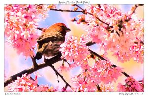Spring Bird in Pink Print by yellowcaseartist