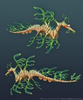 Leafy Sea Dragon by Alemja