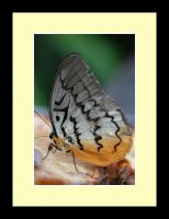 Butterfly Photo 61 by blookz