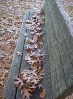 Leaves on a Park Bench by shelbysingswords