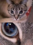 New Camera cat pic! by renonevada