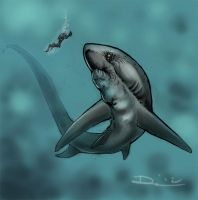 Giant Thresher - shark week sketch #4 by dsilvabarred