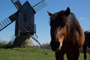 Horse and windmill by zerofilius