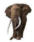 Elephant on a transparent background. by PRUSSIAART