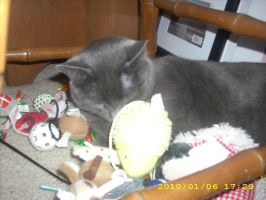 Shadow sleeping with his toys by SonAmyFan1993