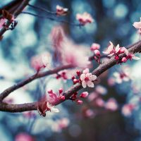 | spring | by Somebody--else