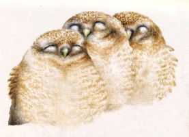 Baby Owls by stupid-little-genius