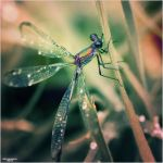 Little Creatures 071 by Frank-Beer