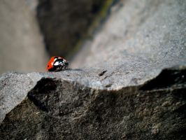 Ladybird 02 by FortisUmbrae