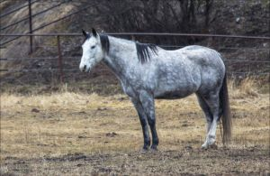 Rocky Mountain Region Horse by RhiskandPeril
