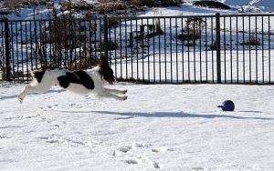 Dog action shot 5 HILARIOUS by Sinned-angel-stock