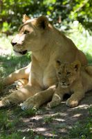 3175 - Lioness and cub by Jay-Co