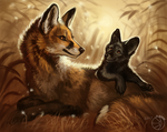 Foxes  by FlashW