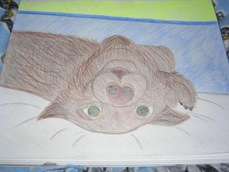 Upside down dog in colored pencils by bubblebear79