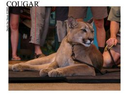 Cougar Relaxing by djsteen