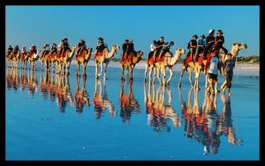 Camels on Cable Beach 4 by wildplaces