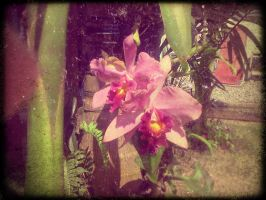 orchid by ledgar