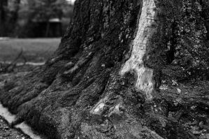 Scarred Tree by lonelysoulsearching