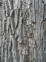 Bark by IdunaHaya-Stock