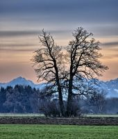FridayTree jm7976-HDR by joergens-mi