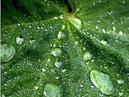 Dew by Siphotografx