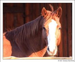 CL Sail D Shasta by silver-spurs