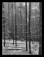 Winter forest II by vanHardenbrook