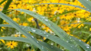 droplets and flowers [5/5] by evanna11