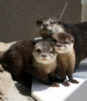 Otter Family Portrait by UlisesGirl