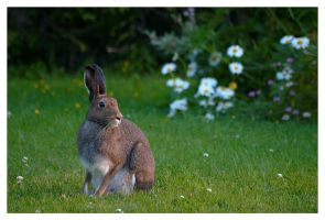 a Rabbit by jjuuhhaa