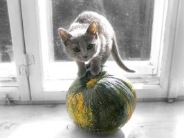 Pumpkin standing on a pumpkin by zAmedena