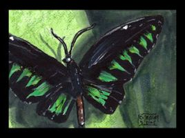 Black and Green Butterfly sketchcard by geralddedios