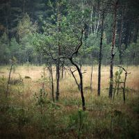 forest tales...VIII by BrokenLens