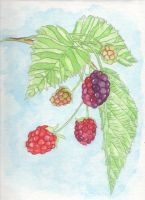 Bundle of Berries by SmellyCat710