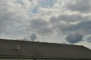 Birds on a roof. by MireInHypocrisy