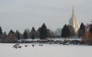 Mormon Temple with Geese by Tawadi