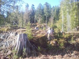 Tree stumps on hill by eyannaandkianalovesu