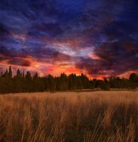 Meadow at Sunset Premade Background STOCK by KijaniKinyonga