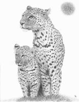 Leopard and Cub by mikebontoft