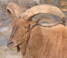 Portrait with horns by starykocur