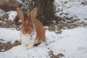 Schnee Hase 3 by DeathProof7891