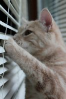 peeking out of blinds by taevans