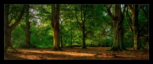 Beech Stand by Shanec86